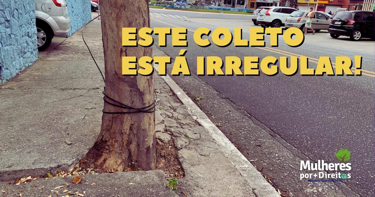 Você sabe a importância do coleto das árvores?